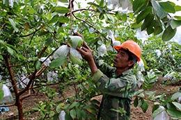 Tái cơ cấu nông nghiệp gắn với xây dựng nông thôn mới: Điểm sáng Chi Lăng