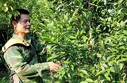 """Chi bộ thôn Đồng Bến: Điển hình """"dân vận khéo"""" phát triển kinh tế"""