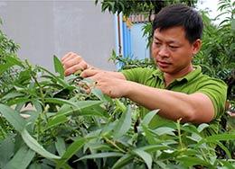 Quỹ hỗ trợ nông dân huyện Hữu Lũng: Hỗ trợ hội viên phát triển kinh tế