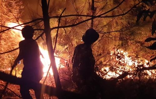 Gần 1.500 người xuyên đêm chữa cháy rừng ở Nghệ An