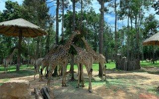 Trải nghiệm công viên động vật hoang dã Safari Phú Quốc