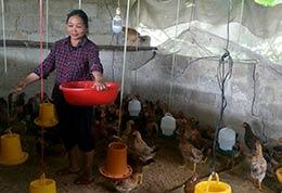 """Phụ nữ xã Thanh Long: Thi đua """"Dân vận khéo"""" thúc đẩy phát triển kinh tế hộ"""