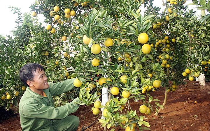 Trái cây Việt Nam từng bước khẳng định thương hiệu