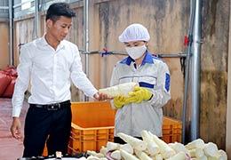 Hợp tác xã sản xuất và cung ứng dịch vụ nông nghiệp xã Quyết Thắng: Hiệu quả từ liên kết sản xuất