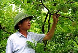 Chương trình cung ứng phân bón trả chậm: Nhiều lợi ích cho nông dân