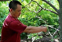 Yên Thịnh: Nâng cao chất lượng cây ăn quả