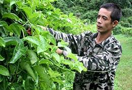 Bắc Sơn: Tăng cường ứng dụng kỹ thuật trong sản xuất nông nghiệp