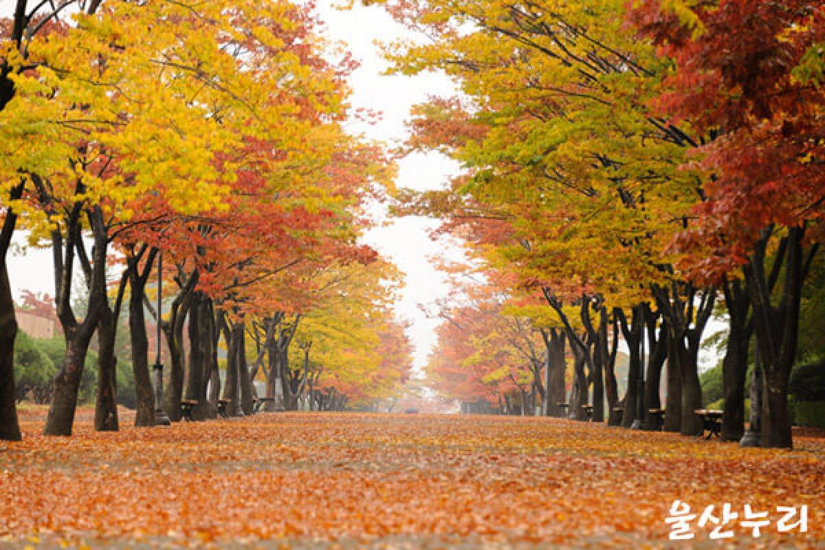 10 địa điểm nên ghé thăm khi đến thành phố Ulsan, Hàn Quốc