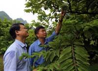 Chi Lăng: Chuyển dịch cơ cấu sản xuất nông nghiệp theo hướng sản xuất hàng hóa tập trung