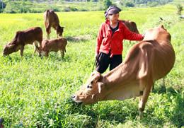 Văn Quan: Tập trung phát triển chăn nuôi