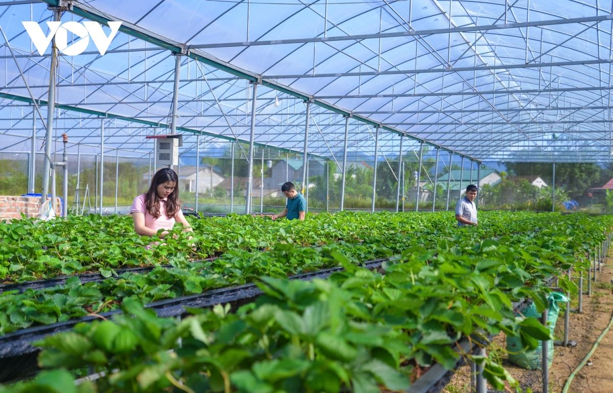Nông nghiệp thông minh - Bước đi đột phá của Cao Bằng