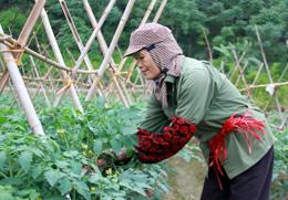 Chi Lăng: Hiệu quả từ chuyển đổi cơ cấu cây trồng