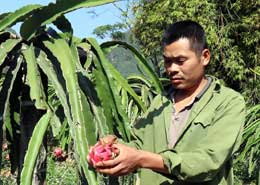 Agribank Tràng Định: Hiệu quả nguồn vốn cho vay lĩnh vực nông nghiệp, nông thôn