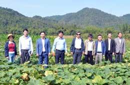 Mô hình trồng  bí đỏ tại xã Điềm He: Đảm bảo dinh dưỡng và đem lại hiệu quả kinh tế khá