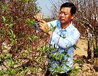 Hiệu quả từ nguồn Quỹ hỗ trợ nông dân