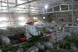 Agribank Lạng Sơn: Đồng hành cùng sự phát triển của nông nghiệp, nông thôn