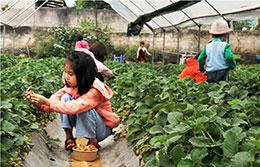 Thành phố Lạng Sơn: Hiệu quả từ trồng cây ăn quả kết hợp du lịch trải nghiệm