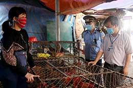 Tăng cường phòng, chống dịch bệnh gia súc, gia cầm tại chợ đầu mối