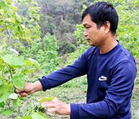 Hội Nông dân xã Hoàng Việt: Chung sức xây dựng nông thôn mới