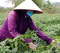 Chi Lăng: Phát triển nông nghiệp theo hướng hàng hóa