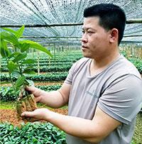 Làm giàu từ vườn ươm giống cây lâm nghiệp