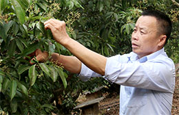 Quan Sơn: Phát triển sản xuất gắn với xây dựng nông thôn mới