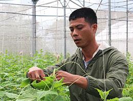 Chi cục Quản lý chất lượng nông lâm sản và thuỷ sản: Tập trung đảm bảo an toàn thực phẩm lĩnh vực nông nghiệp