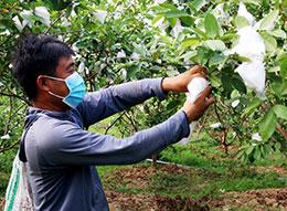 Thành phố Lạng Sơn: Tập trung hỗ trợ phát triển các mô hình kinh tế triển vọng