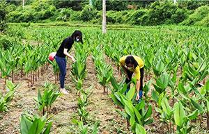 Hỗ trợ sản xuất cho các thôn biên giới đặc biệt khó khăn: Tạo động lực phát triển kinh tế