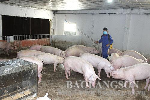 Phòng chống dịch bệnh trong chăn nuôi lợn: Cách làm hay tại hợp tác xã An Hồng