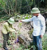 Trồng cây phân tán tại Bắc Sơn: Về đích trước thời hạn