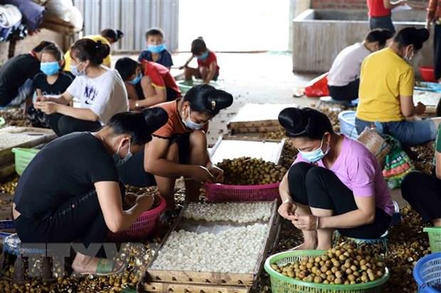 Thúc đẩy vai trò của phụ nữ ASEAN trong lĩnh vực nông nghiệp