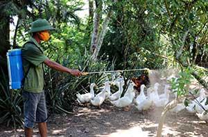 Tràng Định: Tăng cường phòng, chống cúm gia cầm
