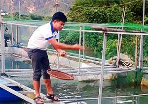 Tăng thu từ mô hình nuôi cá lăng thương phẩm