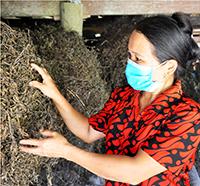 Hội Hoan: Người dân tăng thu từ trồng thạch đen