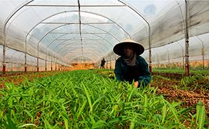 Sản xuất rau hữu cơ: Hướng đi bền vững của Hợp tác xã Nông sản Hữu Lũng