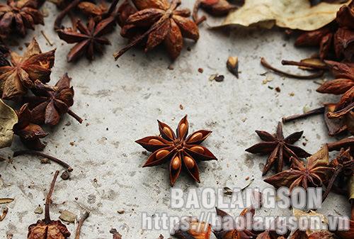 Hoa hồi - Sản vật đặc trưng của Xứ Lạng