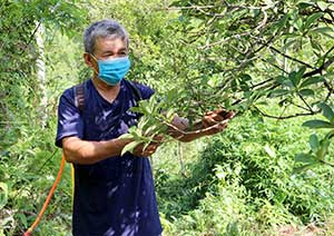Bình Gia: Ứng dụng kỹ thuật để khôi phục và phát triển cây hồi