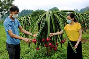 Hữu Lũng: Hỗ trợ nông dân ứng dụng khoa học kỹ thuật vào sản xuất