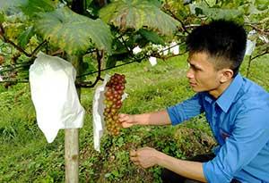 Phát triển kinh tế số ở Bắc Sơn: Thúc đẩy tiêu thụ sản phẩm