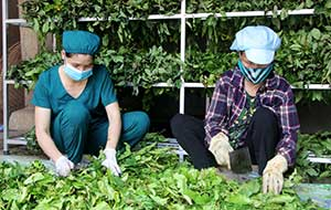 Chi Lăng: Quan tâm phát triển các hợp tác xã nông nghiệp