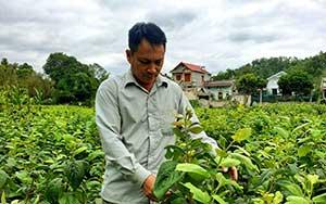 Hợp tác xã Thanh Tân: Linh hoạt, nhạy bén để phát triển
