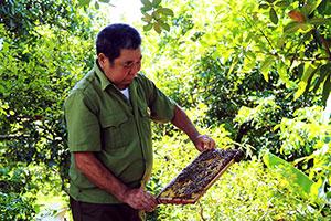 Cựu chiến binh làm giàu từ nuôi ong