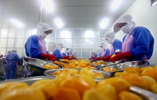 Vietnam-Israel trade likely to top 1 bln USD this year