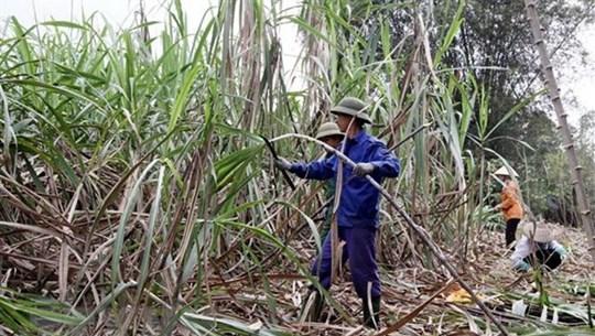 Development chances for sugar sector still ahead: PM