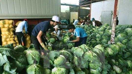 Farm produce prices slump as COVID-19 hits exports