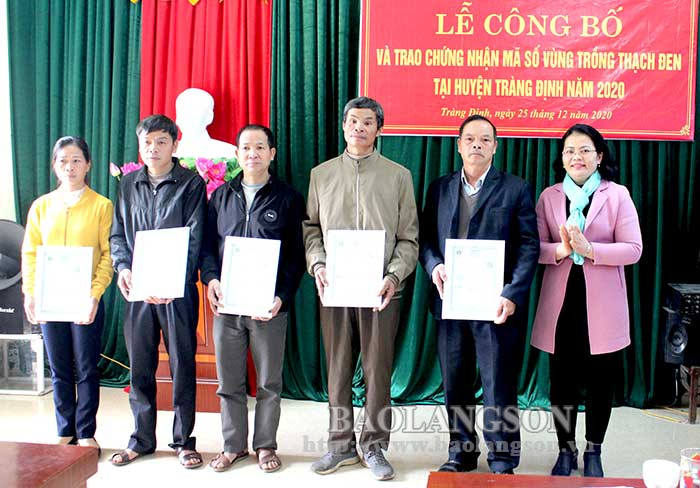 Awarding the code of black jelly growing area in Trang Dinh district