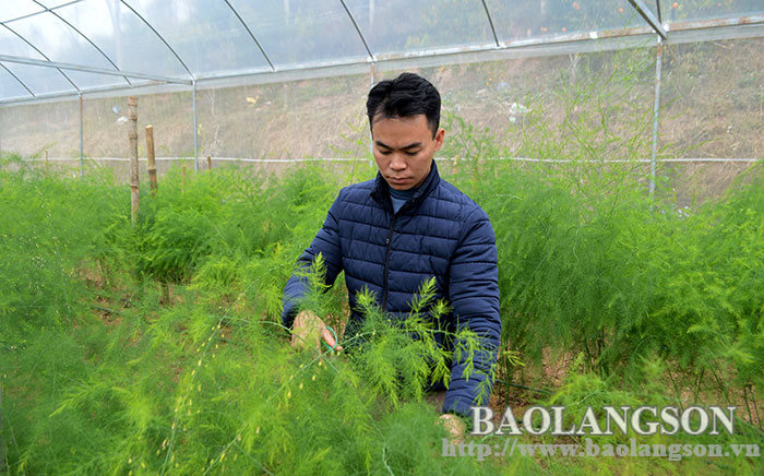 Application of high technology in agricultural production: Increasing product value