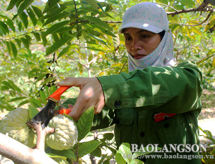 Developing fruit trees in a sustainable direction