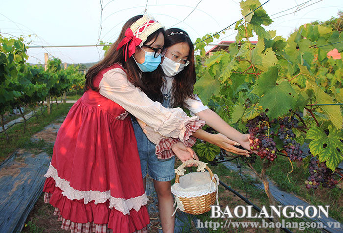 Xu Lang's agricultural tourism: A potential development direction